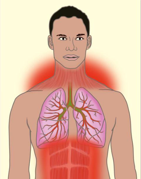 Эффективное дыхание: как правильно дышать при подтягивании на турнике